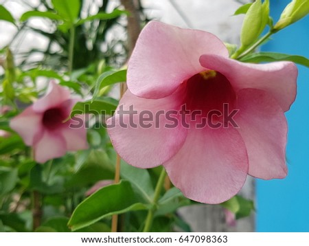 Flower flower colorful beautiful flower orange 569021917 blossom flower beautiful flowerflowering plant voltagebd Image collections