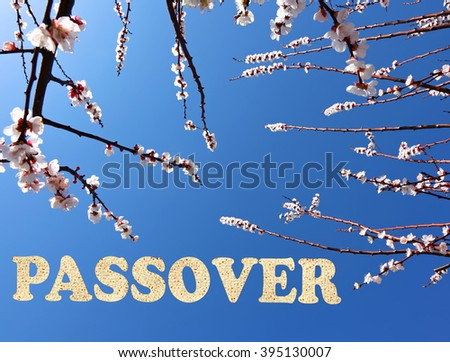 Blossoming fruit tree with blue sky and word Passover made of Matzoh - traditional Jewish dry bread for Passover holiday.Springtime nature and holiday glitter sparkle abstract background