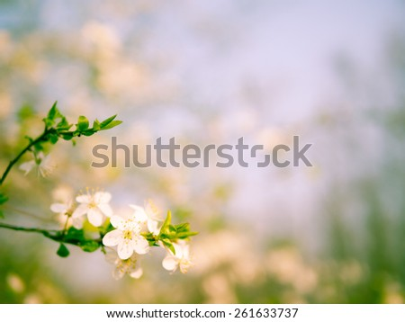 Blossoming tree branch with light blurred background nature. shallow depth of field