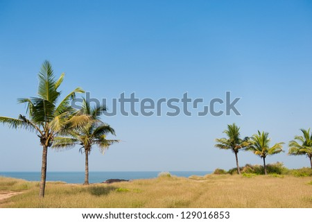 Blue clear skyand lush green plants nearby beautiful beach in In