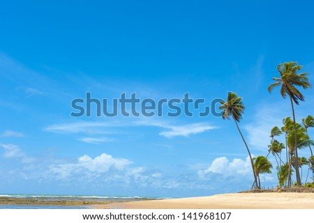 Blue day in the tropical beach .