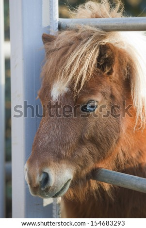 Blue eyed pony horse in stable