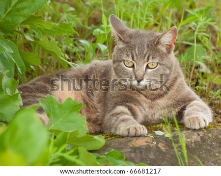 Blue tabby kitty cat resting on a rock under a tree