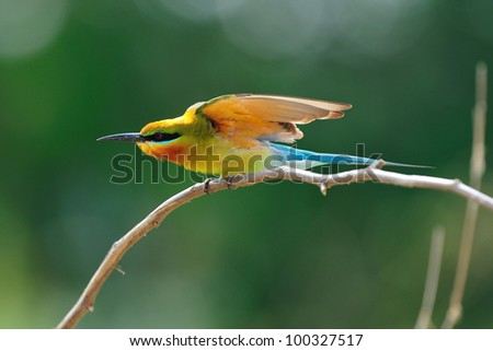 Pond heron stock photo 69499285 shutterstock for Apache mexican cuisine galveston