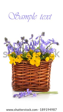 Bluebells and wallflowers in wicker basket on white background with ...