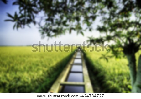 blurred nature image background of paddy field with water canal