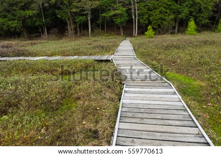 Boardwalk through Swamp Bog