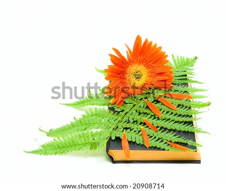 Book and flower isolated on white