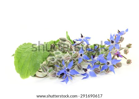Borage leaves and flowers on a bright background