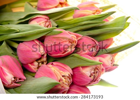 bouquet of fresh pink tulip flowers isolated on white background
