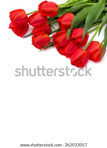 Bouquet of red tulips on white background with space for text