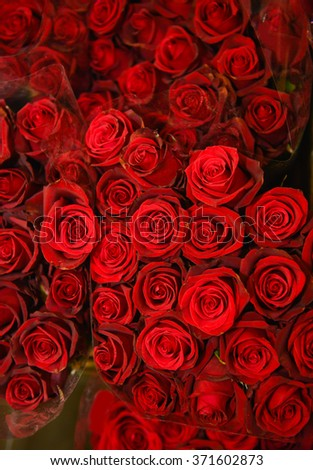 bouquet red rose background
