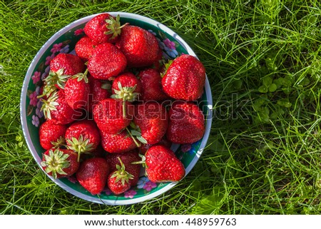Bowl of freshly picked strawberries on green grass on a sunny day