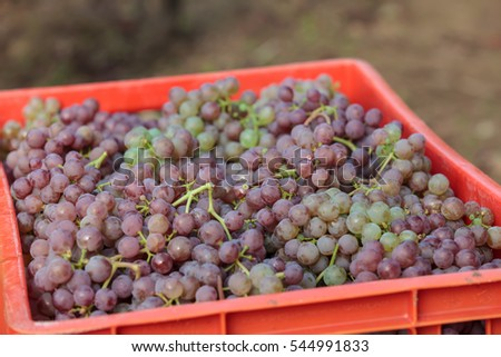 box with fresh grapes