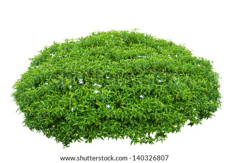 brain shape ornamental tree isolated on white background with clipping path