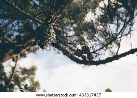 Branch Tree background in Vintage film color tone tuned