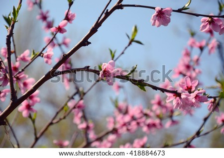 Branches of flowering trees, pink flower in the center of the composition