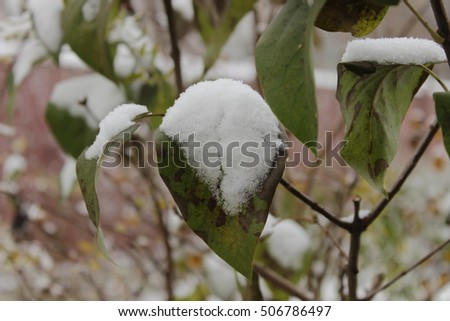 Branches with leaves under the snow