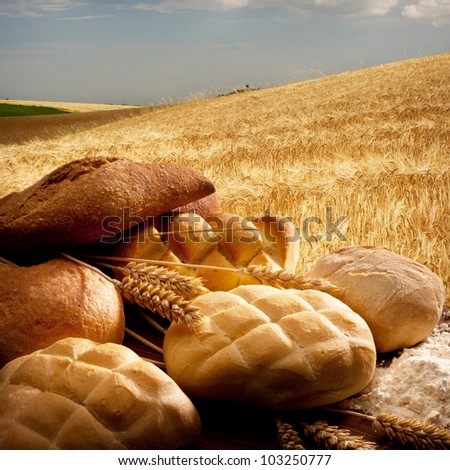 bread in the cereal field
