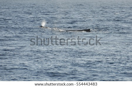 Breathe of the Whale Caf with his mother in the Indian Ocean near Reunion Island