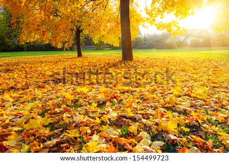 Bright and colorful autumn park