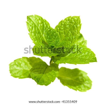 bright green fresh mint branch, isolated on white
