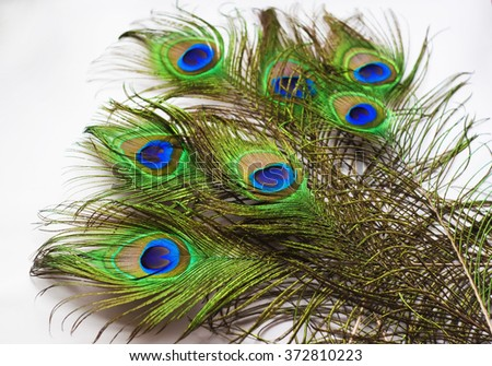 Bright peacock feathers on white background