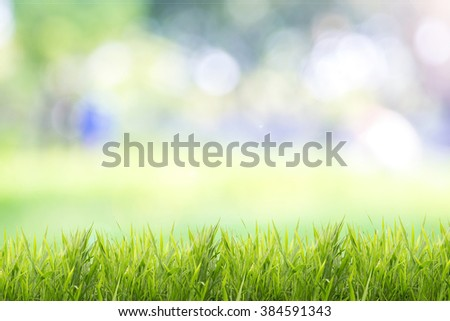 Bright Grass Green Bokeh