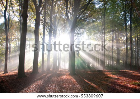 Bright sunbeams shining through trees in forest