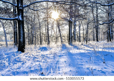 Bright winter landscape with trees in the forest at sunrise.