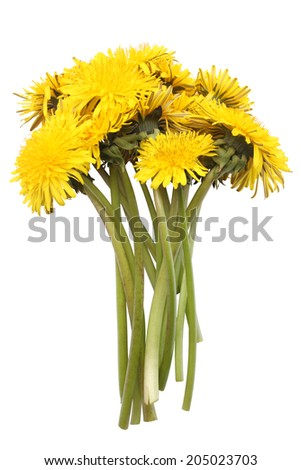 Bright yellow dandelions isolated on white background
