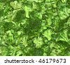 broccoli cabbage close-up - stock photo