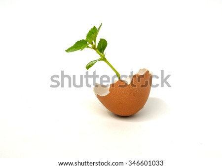 Broken egg with  strong seedling growing on white background.  tree and a strong seedling growing in the center  as a concept of support building a  concept.