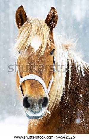 Brown and beautiful horse in snow