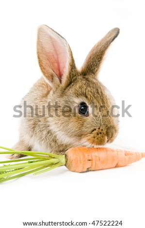 Brown baby bunny and a carrot, isolated on white background