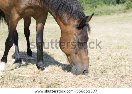 brown horse is grazing in pasture
