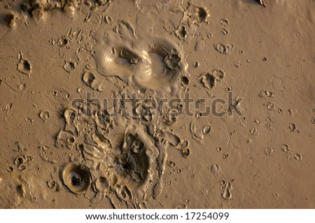 Brown mud with craters