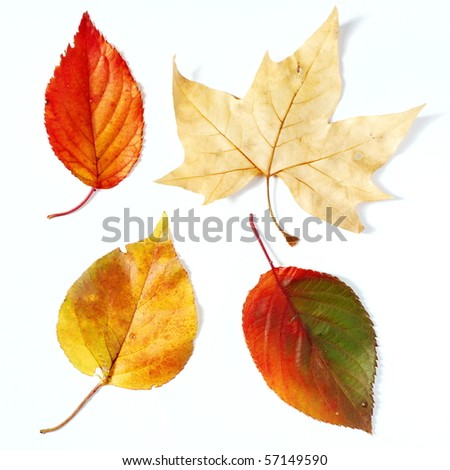 Brown, orange and red fall leaves on white background