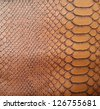 Brown snake skin texture - stock photo