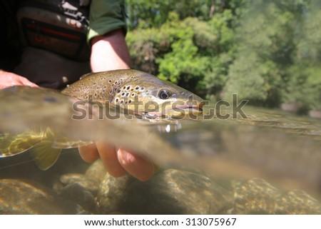 Split Shot Man Fishing On Lake Stock Photo 380832400 ...