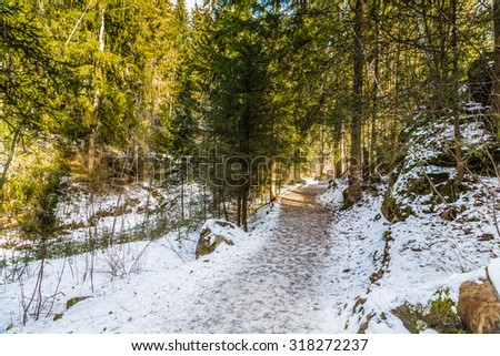 Brown walk path in a forest of green pines, spruces and firs on Dolomites in winter