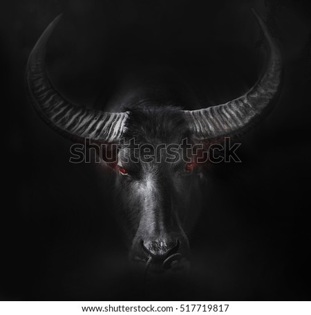 Buffalo head close up
