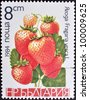 "BULGARIA - CIRCA 1984: A Stamp printed in BULGARIA shows image of a Strawberries ""Fragaria vesca"", from the series ""Berries"", circa 1984 - stock photo"