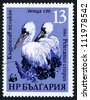 BULGARIA - CIRCA 1984: stamp printed by Bulgaria, shows bird, pelican circa 1984 - stock photo
