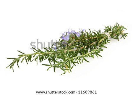 Bunch of fresh flowering rosemary, on white.  Bouquet garni tied with kitchen string.