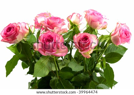 Bunch of pink roses