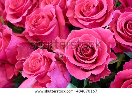 Bunch of pink roses as floral background