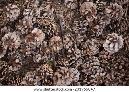 bundle of pine cones