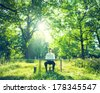 Businessman Working at Desk in Green Forest - stock photo
