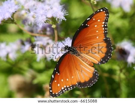 El Gran Debate de Mariposa Bush | Garden Rant